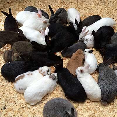 Adopt Me | The Barnyard Sanctuary, NJ Pet Farm Animal ...