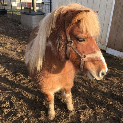 Adopt Me | The Barnyard Sanctuary, NJ Pet Farm Animal Rescue