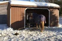 Winter Shelter Improvements