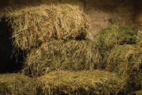Become a Hay Helper